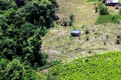 Con cilindros bombas matan a cuatro erradicadores de coca
