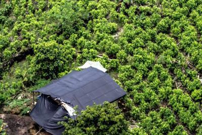 Denuncian que ataque armado dejó ocho muertos y 52 heridos en Tumaco