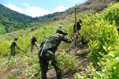 La DEA advierte sobre aumento en cultivos de coca en Colombia