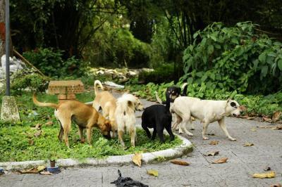 86 % de perros y gatos en Bucaramanga está sin vacunar