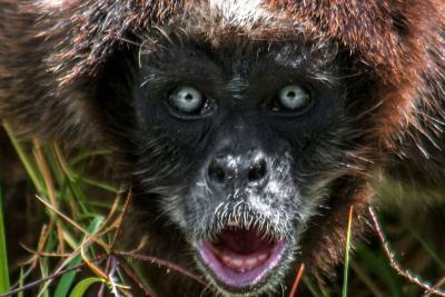 Estas son las especies de fauna más amenazadas en Santander