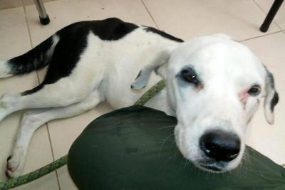 Murió perrita abandonada en aeropuerto de Bucaramanga