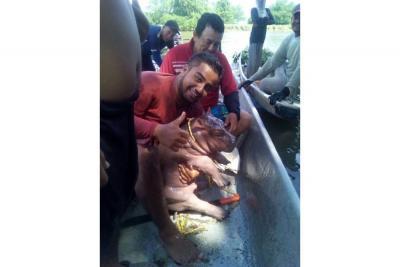 Alertan sobre nueva presencia de hipopótamos en el río Magdalena