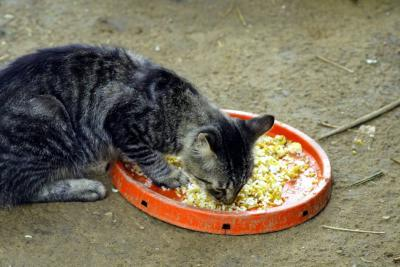 Un refugio de amor felino en Bucaramanga