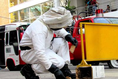 Cuidado con las abejas africanas