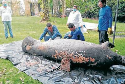 En una semana se conocerían causas de muerte de manatí en Santander