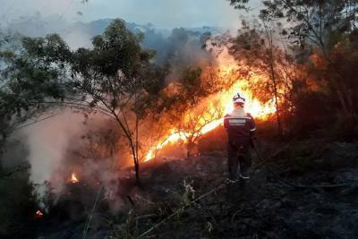 Este año ya se reportan nueve  incendios forestales en Lebrija