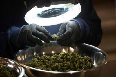 Medicamentos de marihuana se comercializarán a partir de 2019