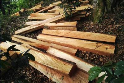 Fiscalía desmantela 'cartel de la madera' en Santander