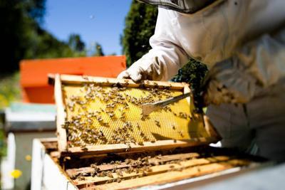 Alerta de crisis alimentaria por desaparición de abejas
