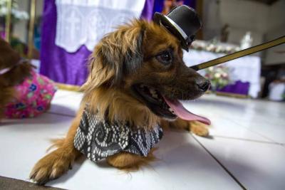 Cientos de mascotas veneraron su santo en Nicaragua