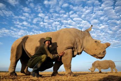Murió el último macho de rinoceronte blanco del norte