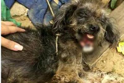 Un perro callejero en Girón recibió un machetazo en la mandíbula