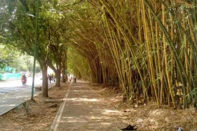 Ofrecen soluciones a problemas en el Parque lineal de Lagos II
