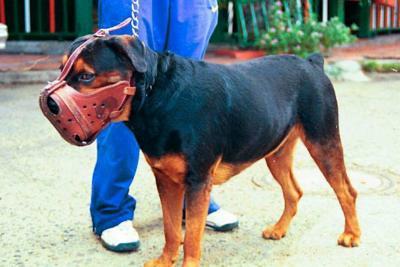 Denuncian falta de apoyo en un caso de mordedura de perro