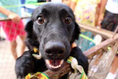 Van 36 sancionados por  maltrato contra animales