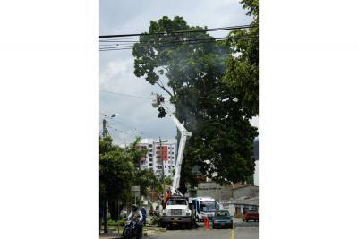 Essa realiza poda en redes para  evitar accidentes y suspensiones