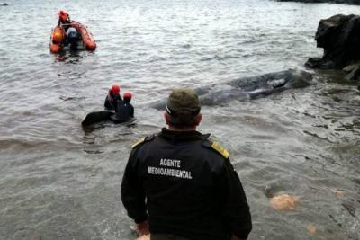 Murió un cachalote tras comer 29 kilos de plástico