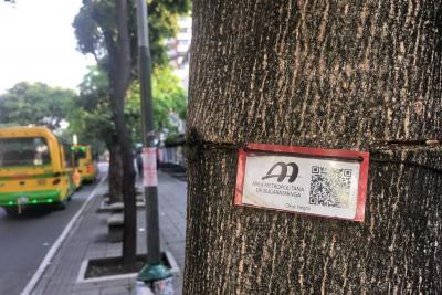 El lunes inicia retiro de guayas que afectan árboles en Bucaramanga