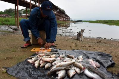 La Anla investigará mortandad de peces en Hidrosogamoso