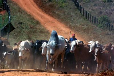 Predios utilizados para contrabando de ganado deben entrar a extinción