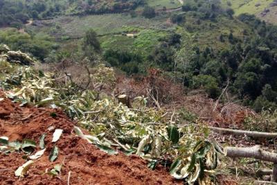 Zona rural de Girón, 'asfixiada' debido a la tala indiscriminada