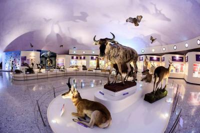 México entra a los museos del siglo XXI