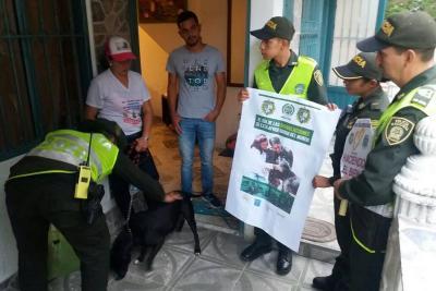 Denuncian propagación de casos 'tvt' en perros callejeros