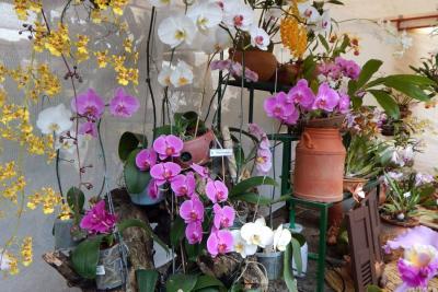 Bucaramanga será la sede de la Exposición de Orquídeas 2018