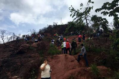 Siembran 250 árboles en Piedecuesta en conmemoración del Día del Árbol