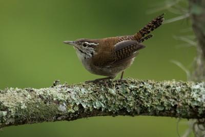 Detectan a cuatro especies en peligro de extinción en el Cañón de Chicamocha