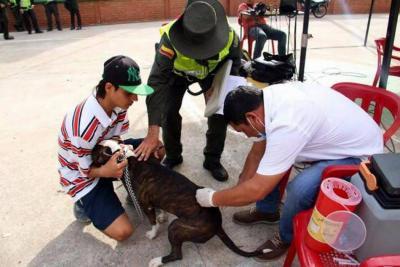 Promueven jornadas de vacunación en caninos