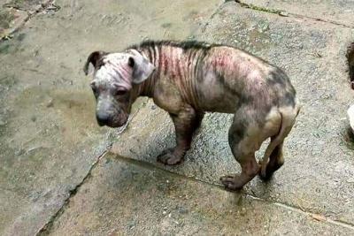 Buscan recursos para perrita que fue maltratada en Bucaramanga