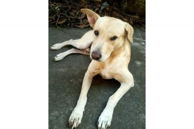 Animalistas solicitan apoyo para proteger mascotas abandonadas
