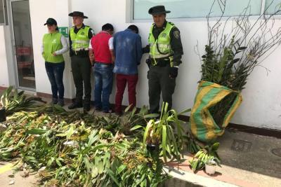 Dos capturados por tráfico ilegal de 200 orquídeas en Santander