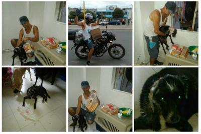 Falleció 'Príncipe', el perro  quemado con aceite hirviendo