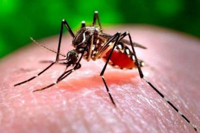 Reportan aumento en casos  de dengue en Bucaramanga