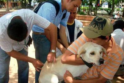 Este año se han vacunado 10.400 caninos y felinos en Bucaramanga