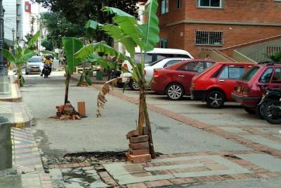 Al Paseo España le siembran plantas  de plátano, tras mal estado de la vía