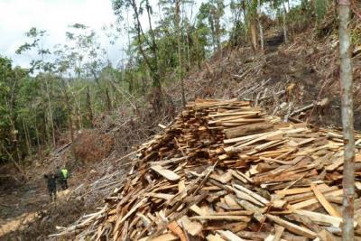 En Santander, 5.336 hectáreas de árboles fueron taladas en 2017