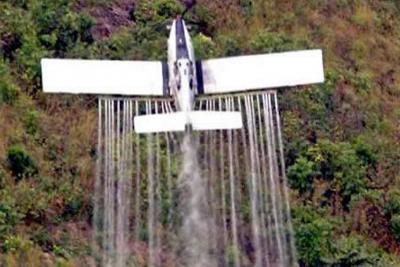 Se reactivarían la fumigaciones aéreas de narcocultivos en gobierno de Duque