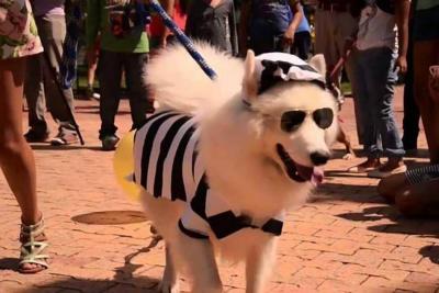 Festival de Mascotas adornará el cumpleaños 242 de Piedecuesta