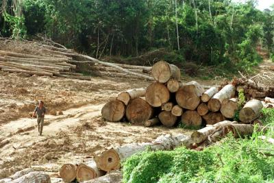 Frontera agrícola del país será de 40 millones de hectáreas