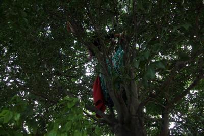 Dos jóvenes cumplieron 72 horas en huelga de hambre en un árbol en Floridablanca