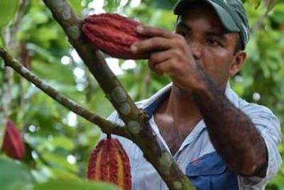 10 de julio se cierran inscripciones para las elecciones cacaoteras