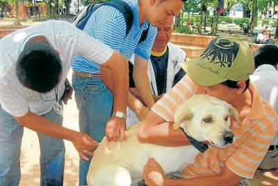 En Contratación, campaña de cuidado de mascotas