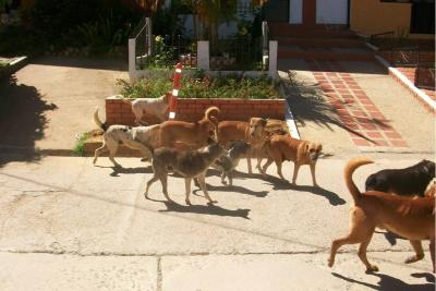 Alcaldía de Bucaramanga no hará el centro de bienestar animal