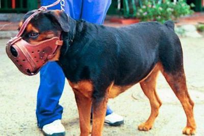 Inició el censo a perros  potencialmente peligrosos