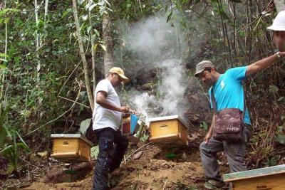Con método novedoso, Bomberos buscan salvar las abejas en Bucaramanga