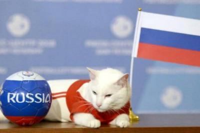 El 'gato oráculo' ya tiene su primer finalista de Rusia 2018